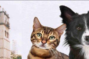 Ημερίδα ζώα συντροφιάς στην Κοζάνη