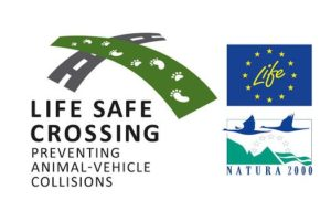 life safe crossing